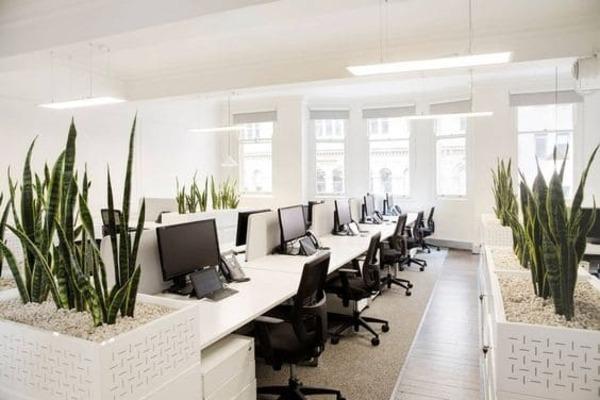 không gian văn phòng làm việc xanh - Crystal Design TPL