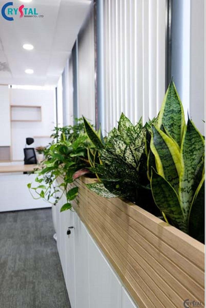 ý tưởng thiết kế văn phòng nhiều cây xanh