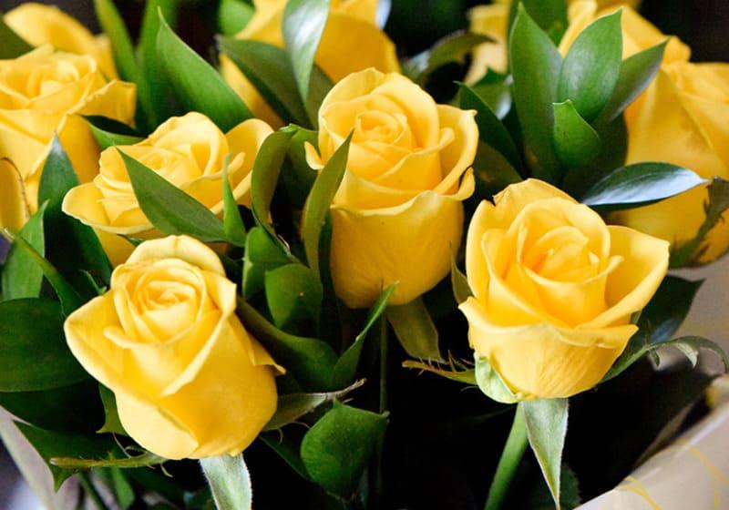 cây hoa hồng vàng để bàn làm việc hợp mệnh kim mang nhiều may mắn