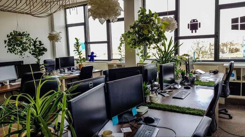 cây phong thủy trên bàn làm việc