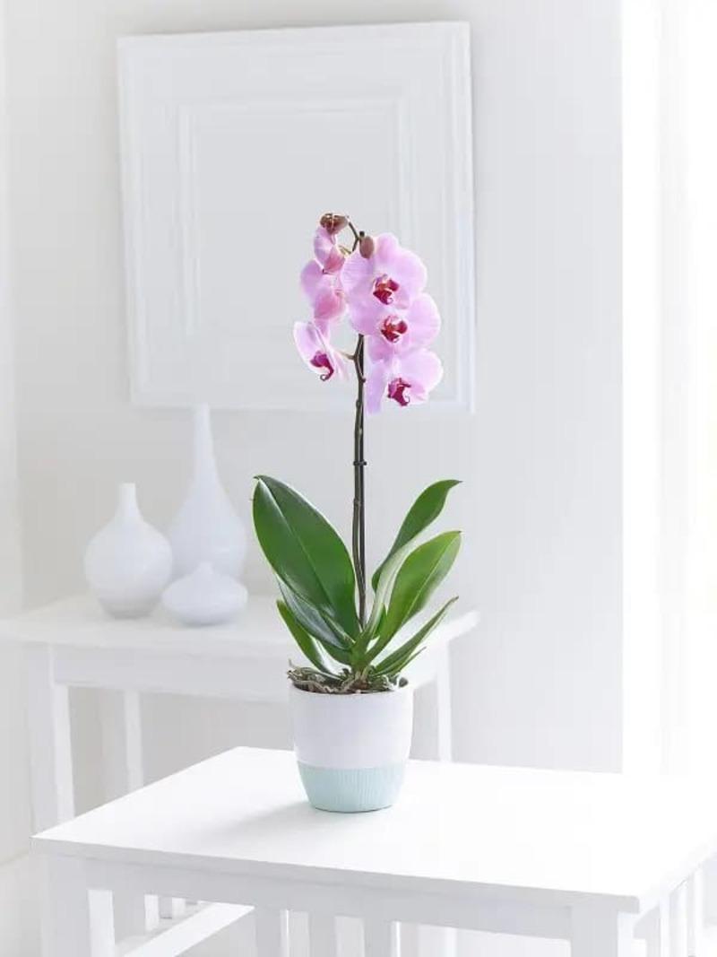 mệnh Thổ trồng cây gì - Crystal Design TPL