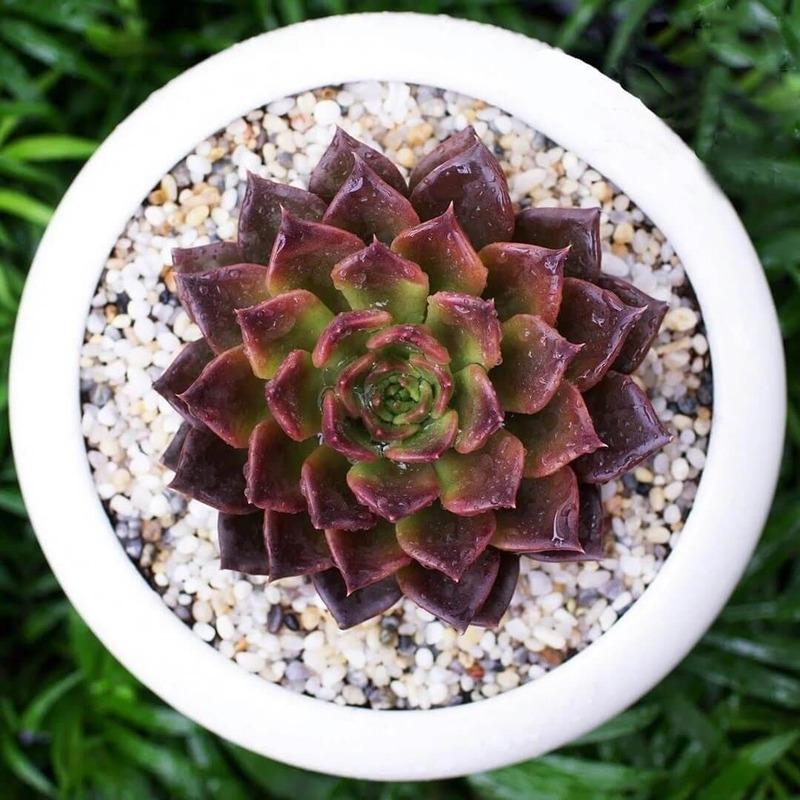người mệnh thổ nên dùng cây để bàn loại gì - Crystal Design TPL