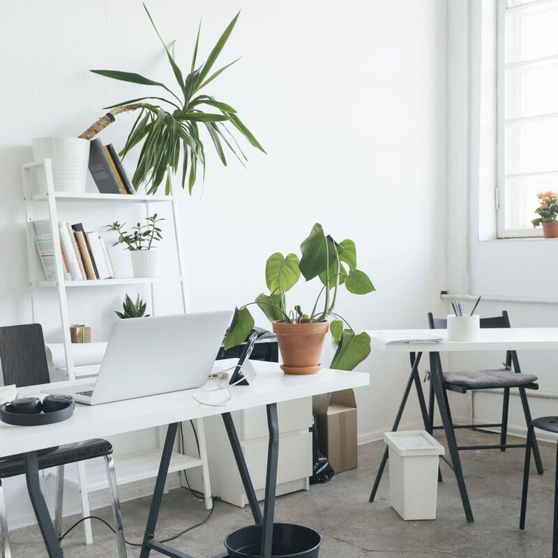 trồng cây để bàn làm việc