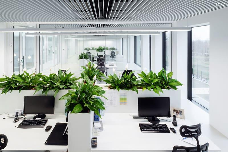Tô điểm phòng làm việc đơn điệu bằng cây xanh